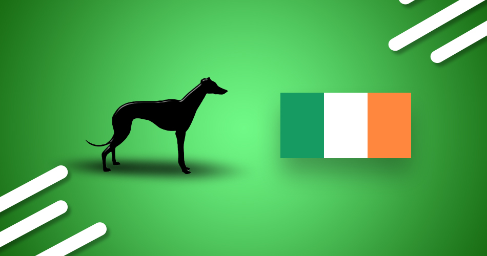 Top Irish Greyhound Races Header