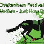 Cheltenham Festiveal: Horse Welfare - Just How Bad Is It
