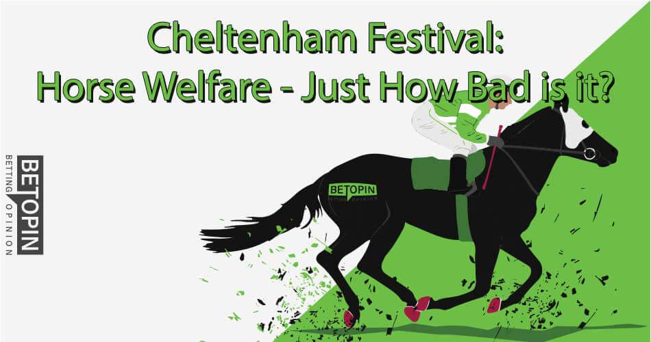 Cheltenham Festiveal: Horse Welfare - Just How Bad Is It